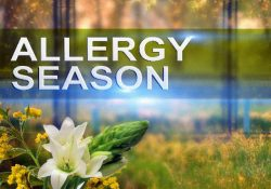 Cheap effective allergy medication